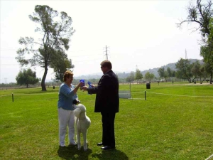 lapoc-poodle-members-events-1