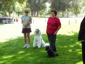 lapoc-poodle-specialty-2009-3