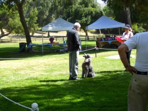 lapoc-poodle-specialty-2009-8