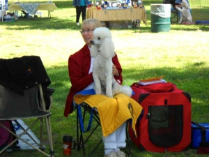 lapoc-poodle-specialty-2010-14