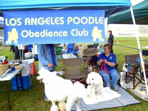 lapoc-poodle-top-dog-2007-2